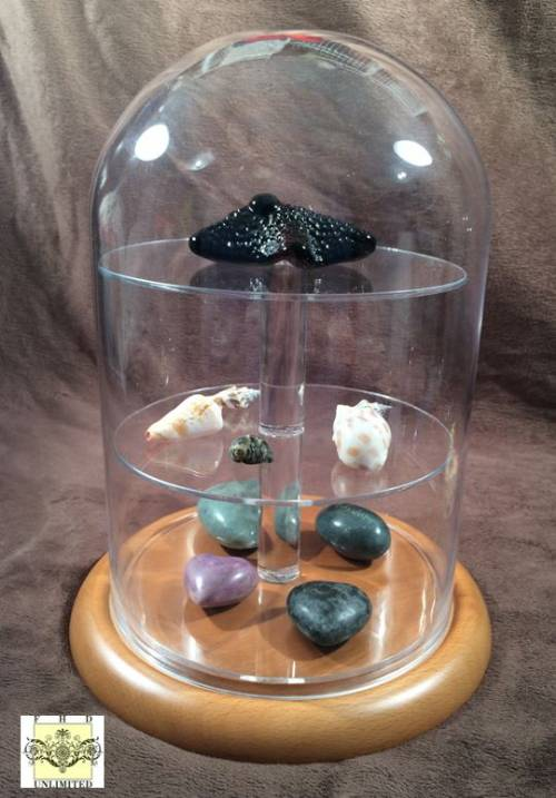 "Display Shelves For Collectibles >> Glass Platform Dome - 8"" x 12"", Thimble Display Domes and ..."