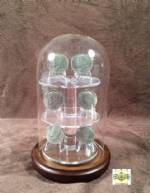 Glass Platform Coin Display Dome - 4