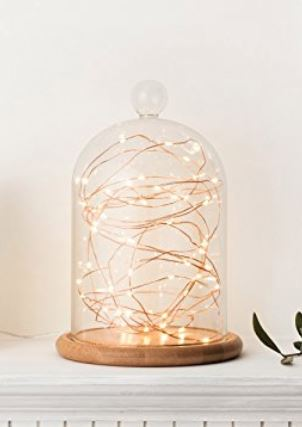 "Glass Cloche - 6"" x 9"" Bell Jar Dome"