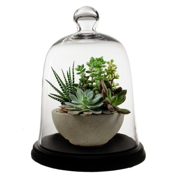 Gl Dome Bell Jar Cloche With Base