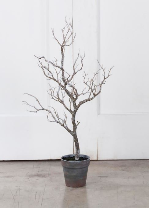 Display Trees -  Natural Deadwood - Small - Set of 2