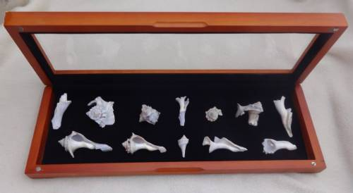 Shadow Box - Specimen Display Case