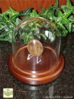Challenge Coin Display Dome - Glass - 4
